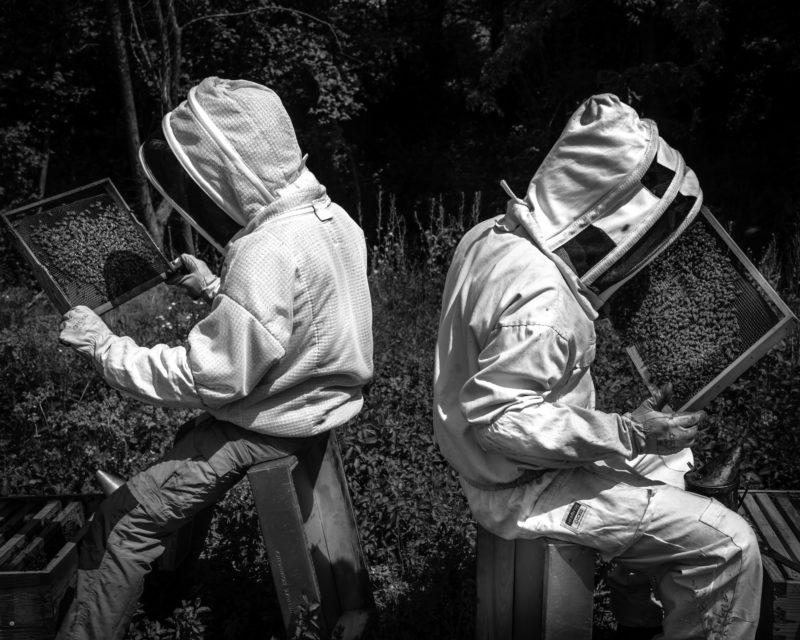 #traçabilité #transparence #miel #madeinfrance #mieldefrance #apidologie #hautdegamme #luxe #excellence #mielluxe #apiculture #apiculteurécoltant #abeille #miellavande #mielsaintebaume #mielprovence #épicerie #épicerfine #mielbourgogne #cadeau #nature #biodiversité #provence,miel luxe,luxe,traçabilité,qualité,madeinfrance,miel,apidologie,haut de gamme,excellence,apiculture,apiculteur récoltant,abeille,miel lavande,miel sainte-baume,miel provence,épicerie,épicerie fine,miel bourgogne,cadeau,biodiversité,provence