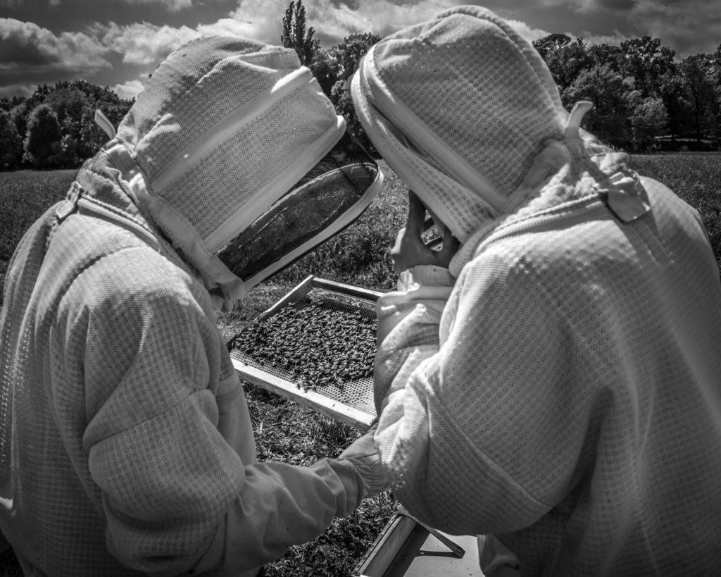 #traçabilité #transparence #miel #madeinfrance #mieldefrance #apidologie #hautdegamme #luxe #excellence #mielluxe #apiculture #apiculteurécoltant #abeille #miellavande #mielsaintebaume #mielprovence #épicerie #épicerfine #mielbourgogne #cadeau #nature #biodiversité #provence