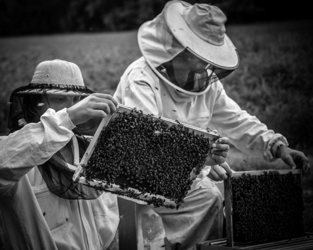 miel,miel provence,provence,haut de gamme,luxe,miel bourgogne,traçabilité,qualité,épicerie,épicerie fine,abeille,biodiversité,miel france,made in france,apiculture,apiculteur récoltant,sainte-baume,miel sainte-baume,la manufacture du miel